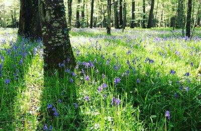 Reclaiming my inner spring – nurturing tender emergence after the deep winter of our menstruation