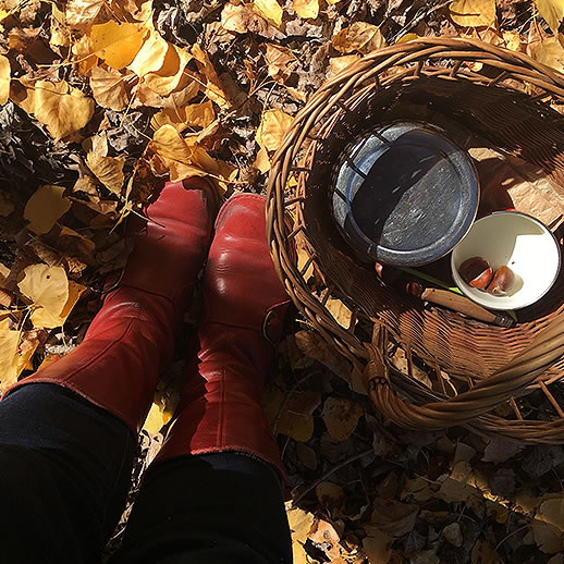 <h1>Foraging for poetry</h1>